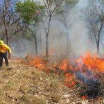 incendios forestales por altas temperaturas 150x150 - Colima, en alerta por incendios forestales debido a altas temperaturas - #Noticias