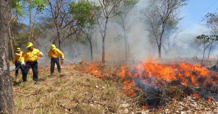 incendios forestales por altas temperaturas 696x366 - Colima, en alerta por incendios forestales debido a altas temperaturas - #Noticias