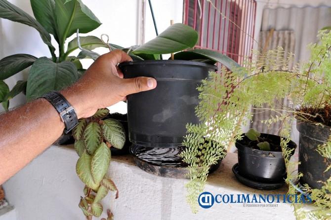 Saneamiento macetas dengue