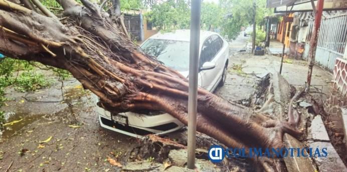 cae árbol sobre carro