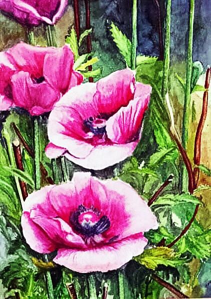 Poppies (watercolour)