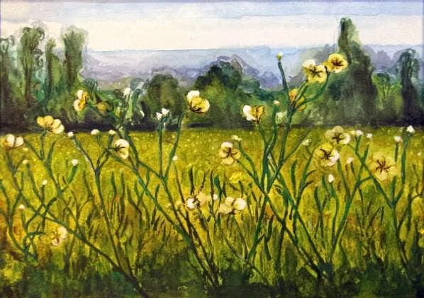 Buttercup Field, Somerset