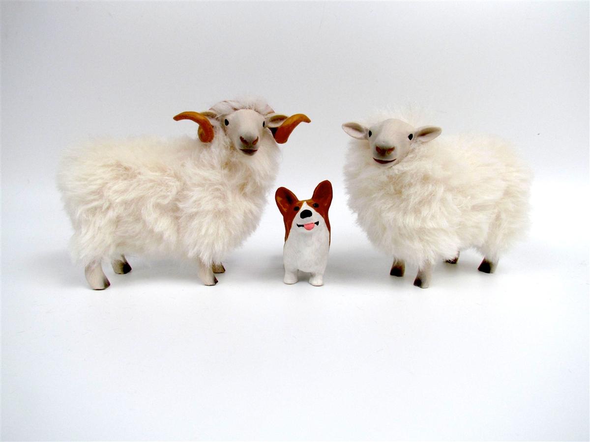 Welsh Mountain Ewe And Ram With Pembroke Corgi