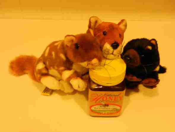 a Tasmanian Fox, a Tasmanian Devil, a Quoll and a jar of Tasmanian honey