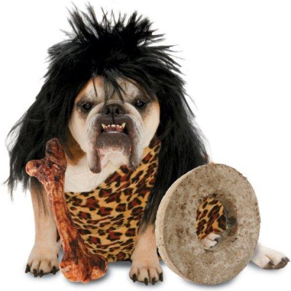 zelda cave dog costume at halloween24.com