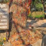 Cambodia - killing tree
