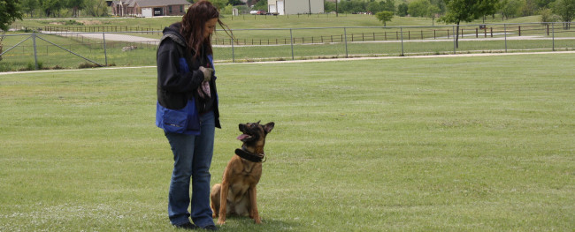 Go Train Your Dog
