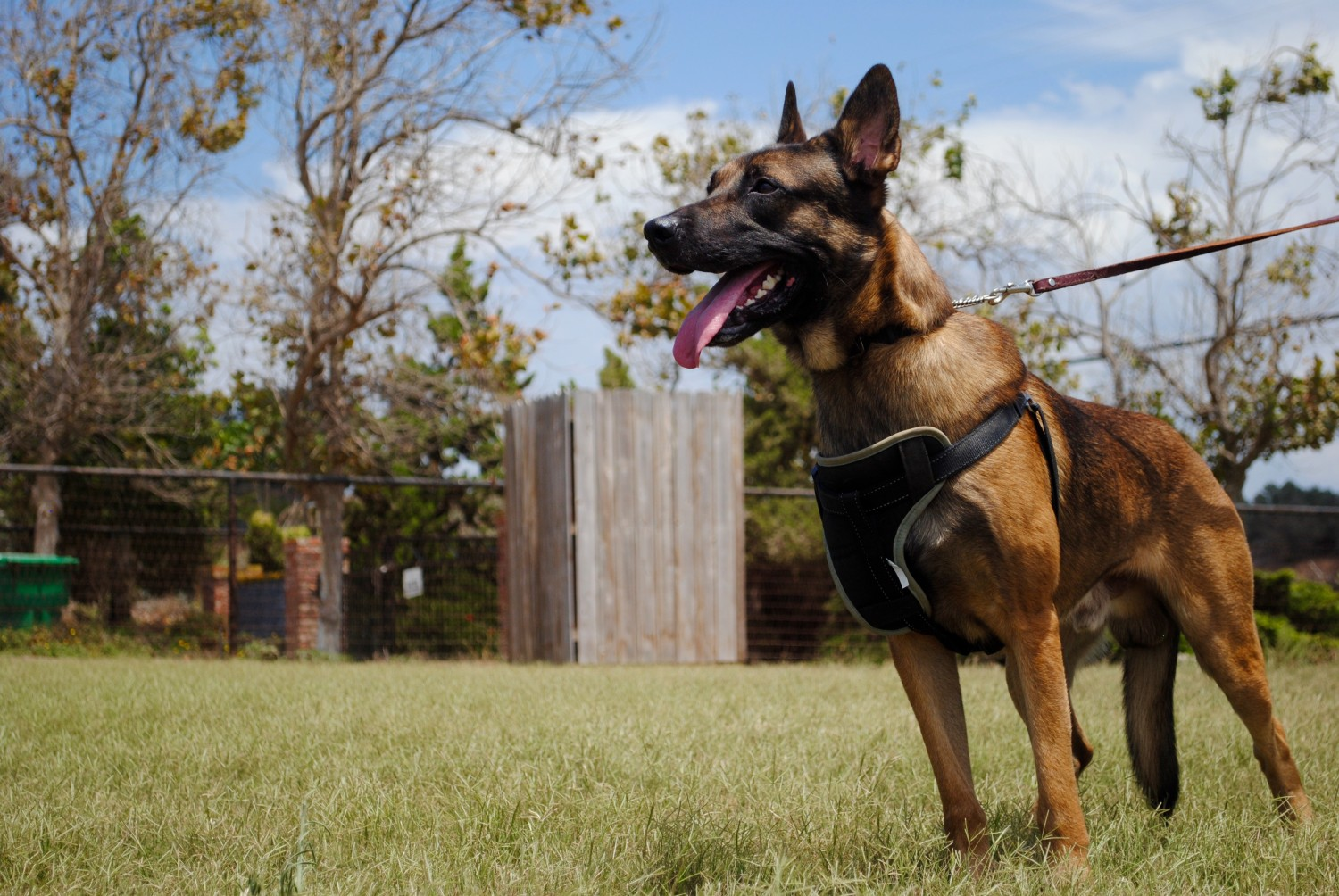 Making Mistakes: Dog Training or Simply Showing Off?