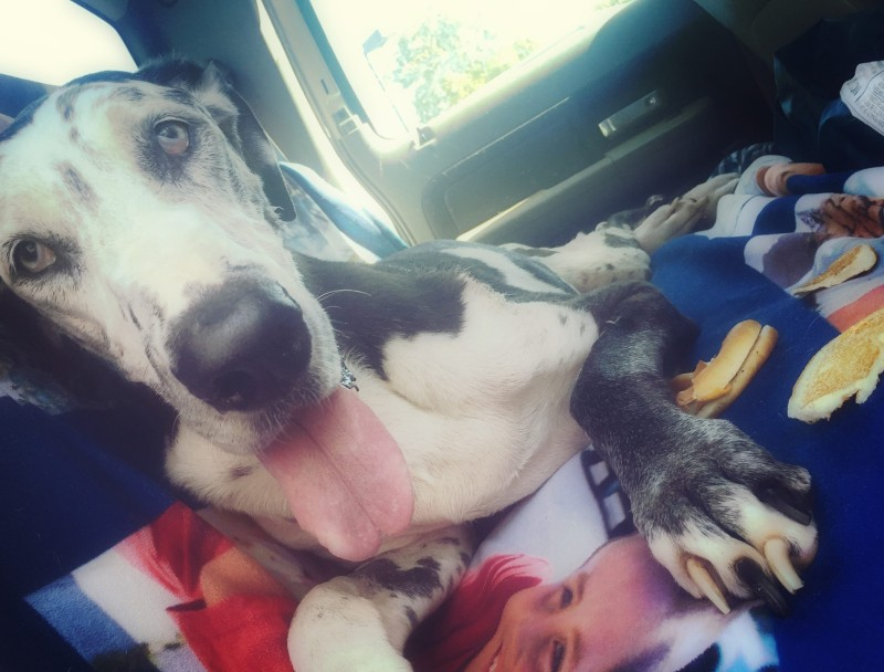 Guilt, Mercy and the Love of a Great Dane