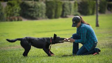 Meagan Karnes Playing Tug with Black Malinois
