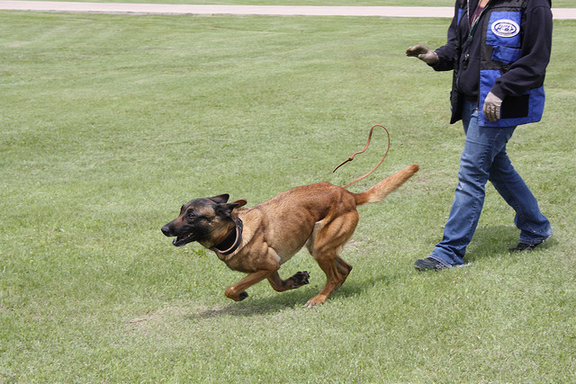 Getting Competitive: The One Thing You Need to Be Successful in Dog Sports
