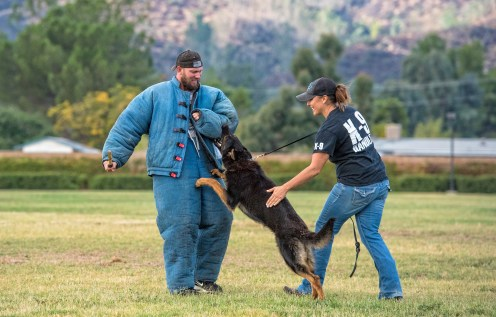 German Shepherd Protection Training