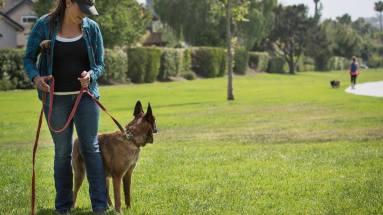 Dog won't focus during training