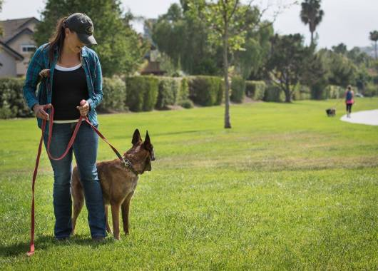 Dog trainer, Meagan Karnes walks Malinois while in sight of a reactive dog.