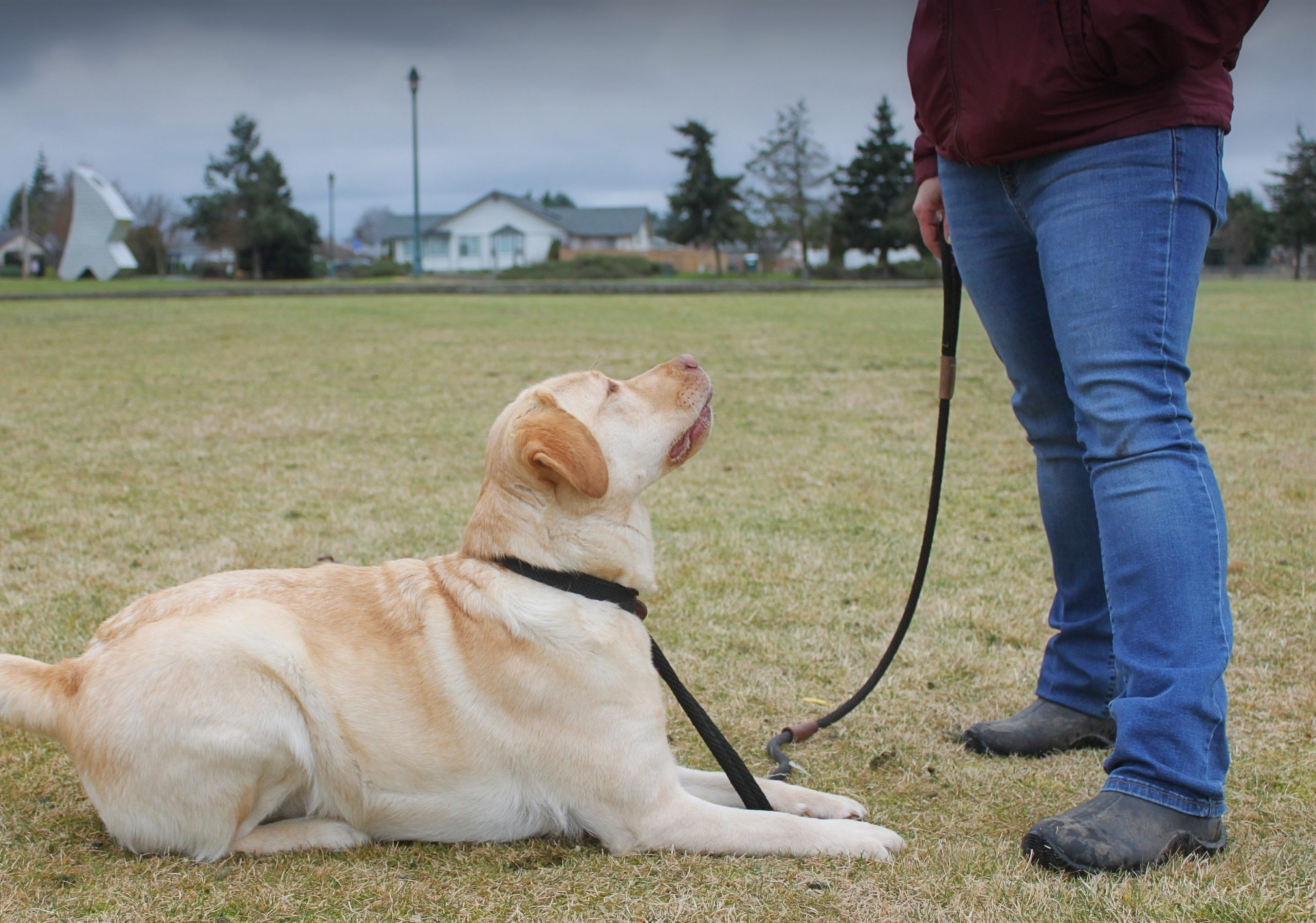 From Disaster to Down-Stay: The importance of empowerment in dog training