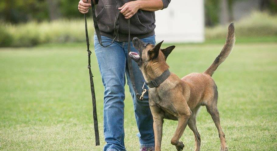 Make it or Break it: How to respond to your dog's mistakes in training