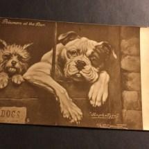 Vintage bulldog postcard