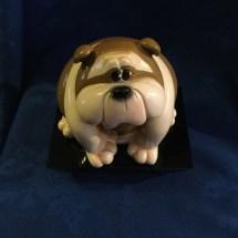 Chubby little bulldog