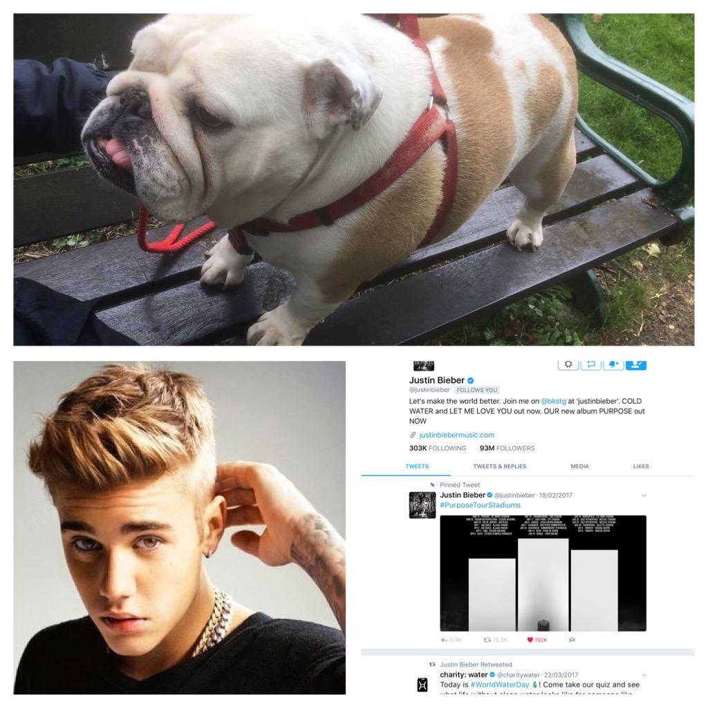Justin Bieber, follower or bulldog lover