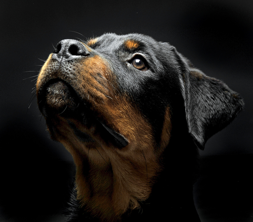 How To Take A Great Dog Headshot Photo For Your Wall