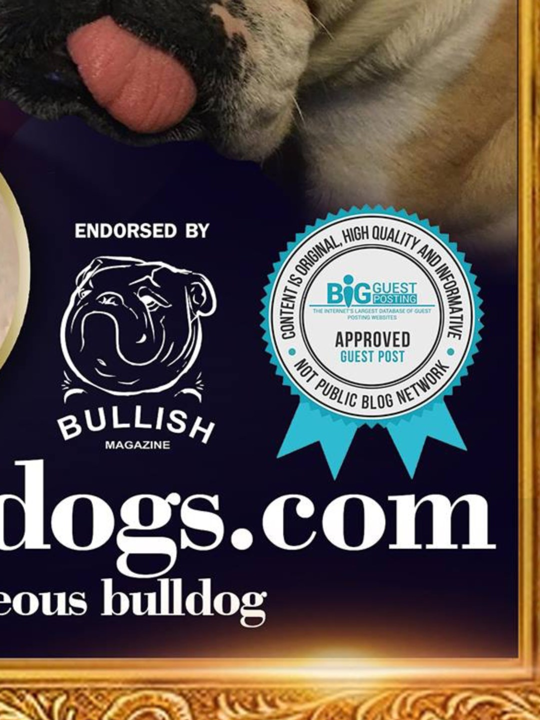 Collectibulldogs our Blog Questions Answered