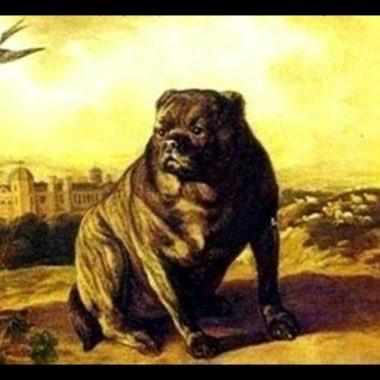 Wynne's Return & The Victorian Bulldog Redux