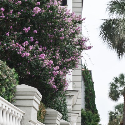 What to Do in Charleston