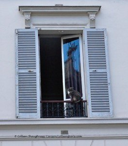 Observing cat along the rue de Turenne