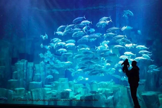 Aquarium-Trocadero-Cineaqua - man with baby in front of window