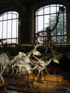 Museum of Natural History Four legged shadows Musee d'Histoire Natural Paris
