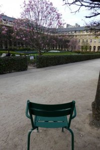 Luxembourg chair in Palais Royal, magnolias in bloom
