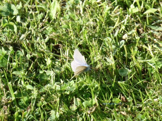jardinsplantesbutterfly colleensparis