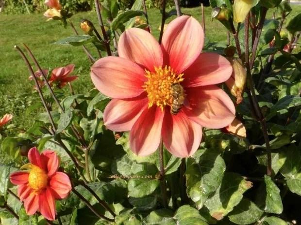 jardinsplantespinkbee05 colleensparis