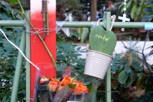 Bataclan. Flowers, photos and symbols (Paix - Peace written on a cactus)