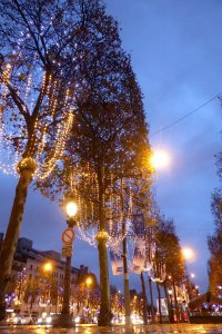 Champs Elysées trees illuminated