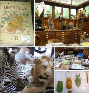 Deyrolle curiosity shop collage, Paris