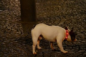 Image of dog with bright color collar at Pompidou Center