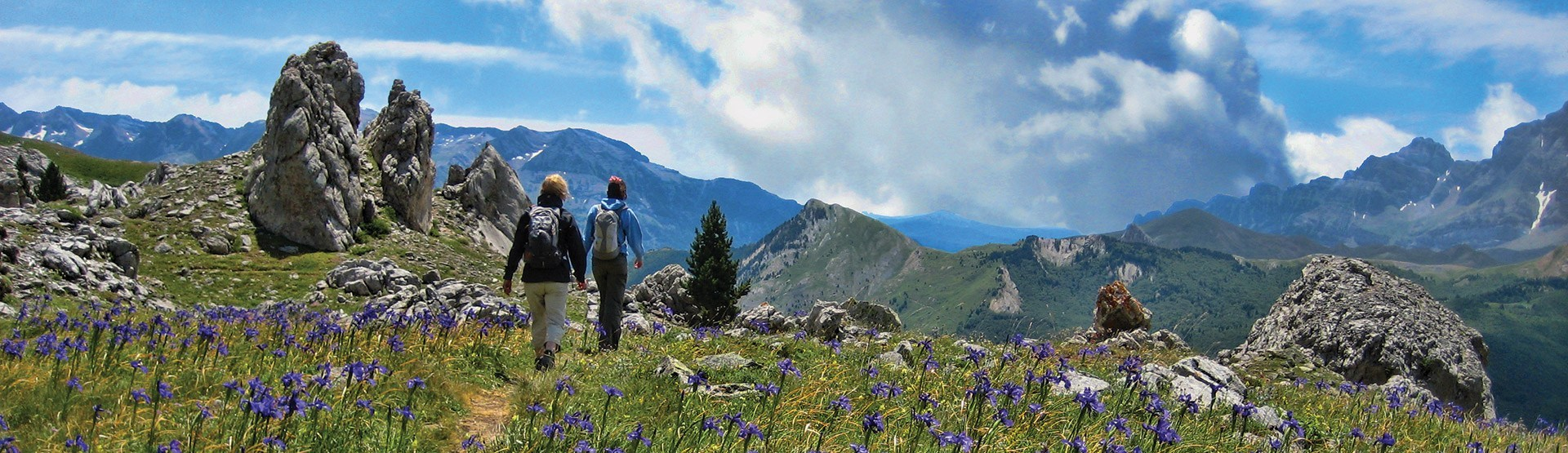 Wild and Alpine Flowers in the Pyrenees and Spain - English Iris