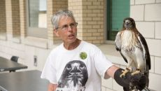 Blackland Prairie Raptor Center presenter and falcon