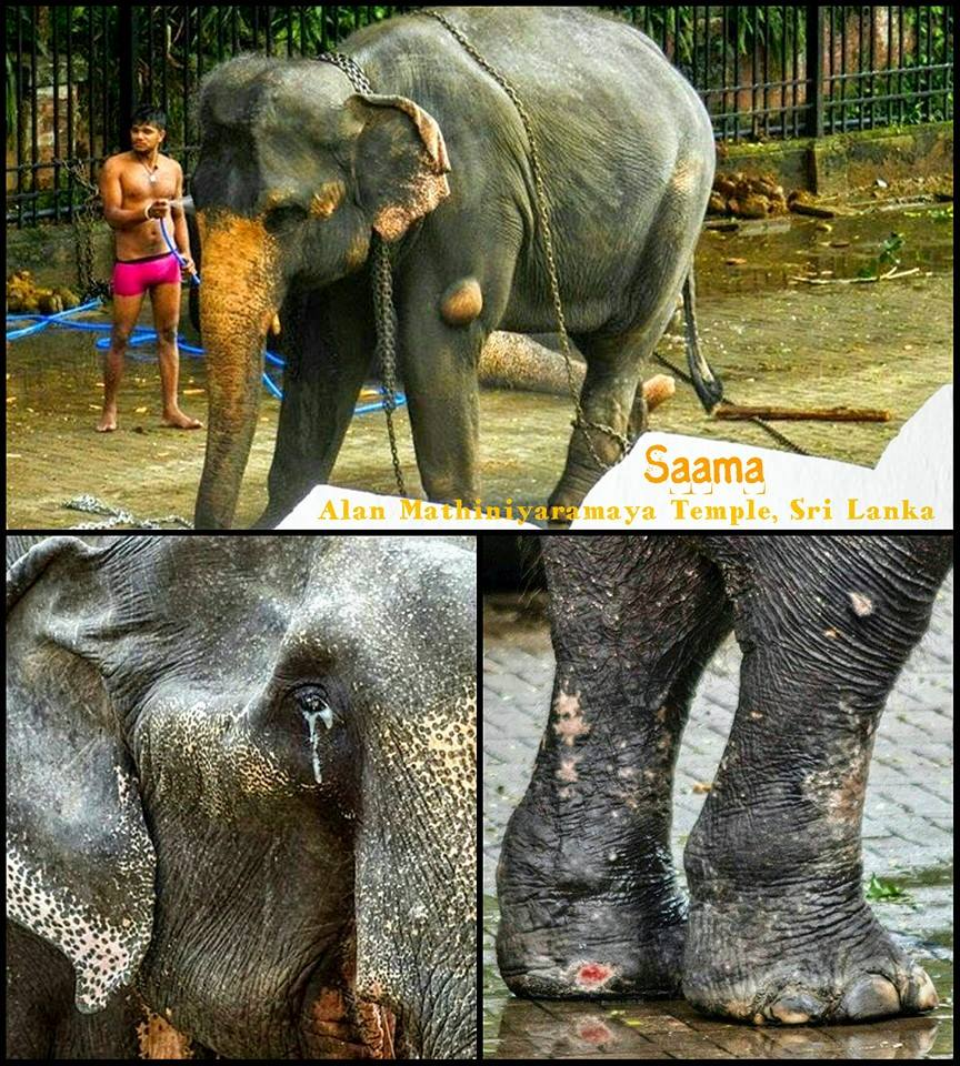 Petition Launched Against Monk Ill-Treating Elephants