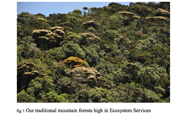 traditional-mountain-forests