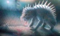 could this be the chupacabra of legends?