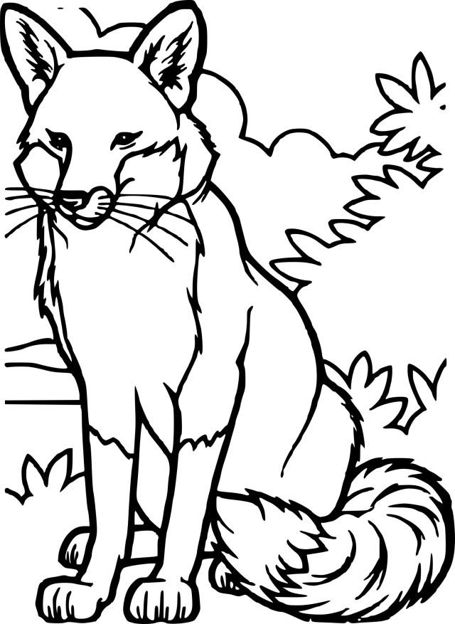Coloriage renard et dessin à imprimer