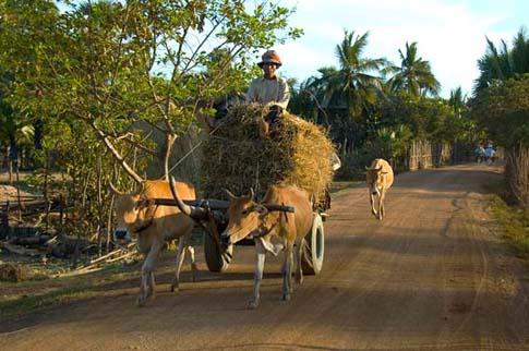 Kampong Thom - Sabor Prey Kuk - Cambodia - Cambodge