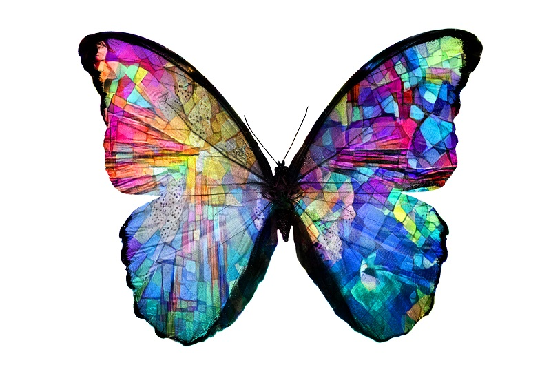 Butterfly Color Meanings And Symbolism