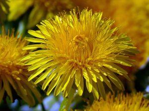flower-946502