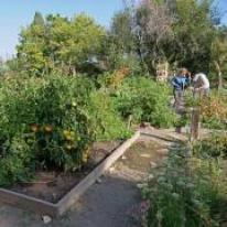 Professor Jill Litt and Program Coordinator Angel Villalobos look over a participant garden