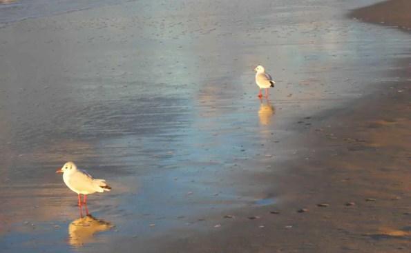 Birds on the beach (Photo – Marta Chociłowska).