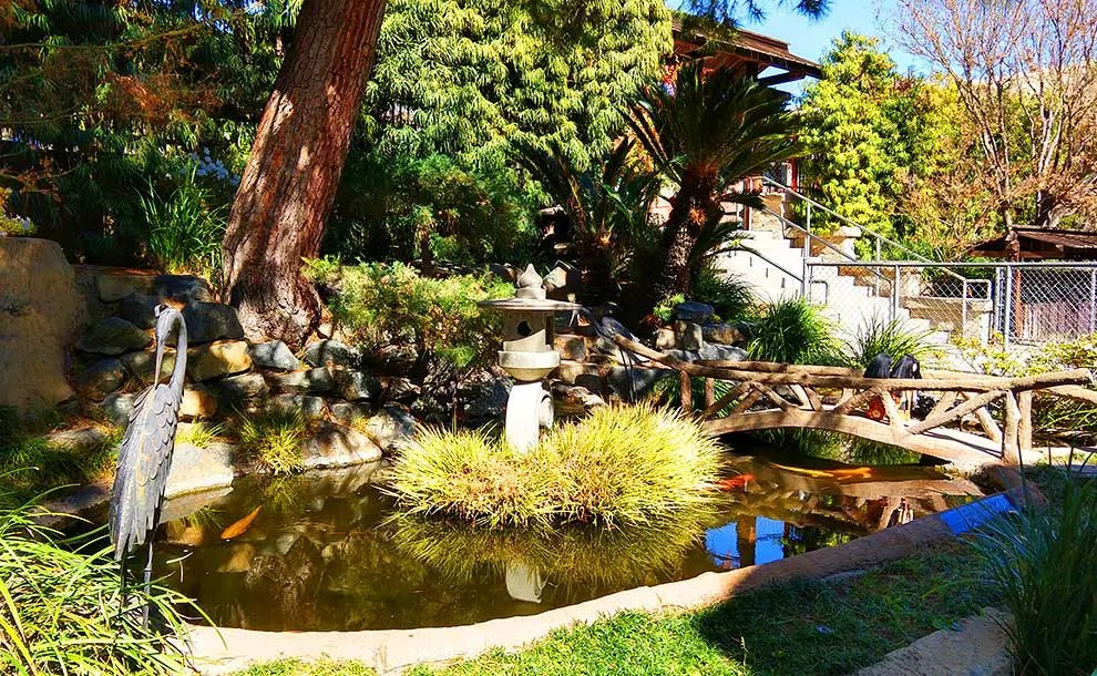 The Fascinating History Of A Small Japanese Garden In Sierra Madre Coloradoboulevard Net