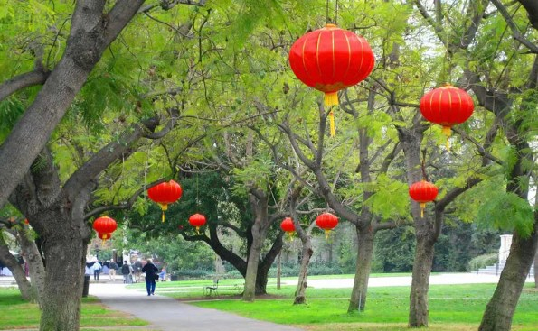 Red lanterns hung from a tree
